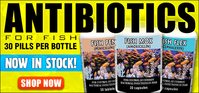 Fish Antibiotics